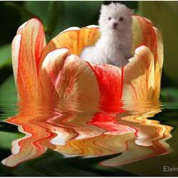 Пазл онлайн: В цветке