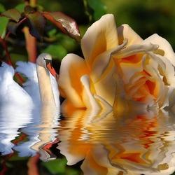 Пазл онлайн: Красота и грация