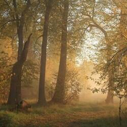 Пазл онлайн: Лесной рассвет