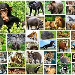 Пазл онлайн: В мире животных