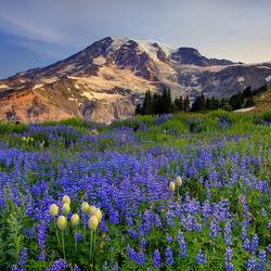 Пазл онлайн: Цветы и горы