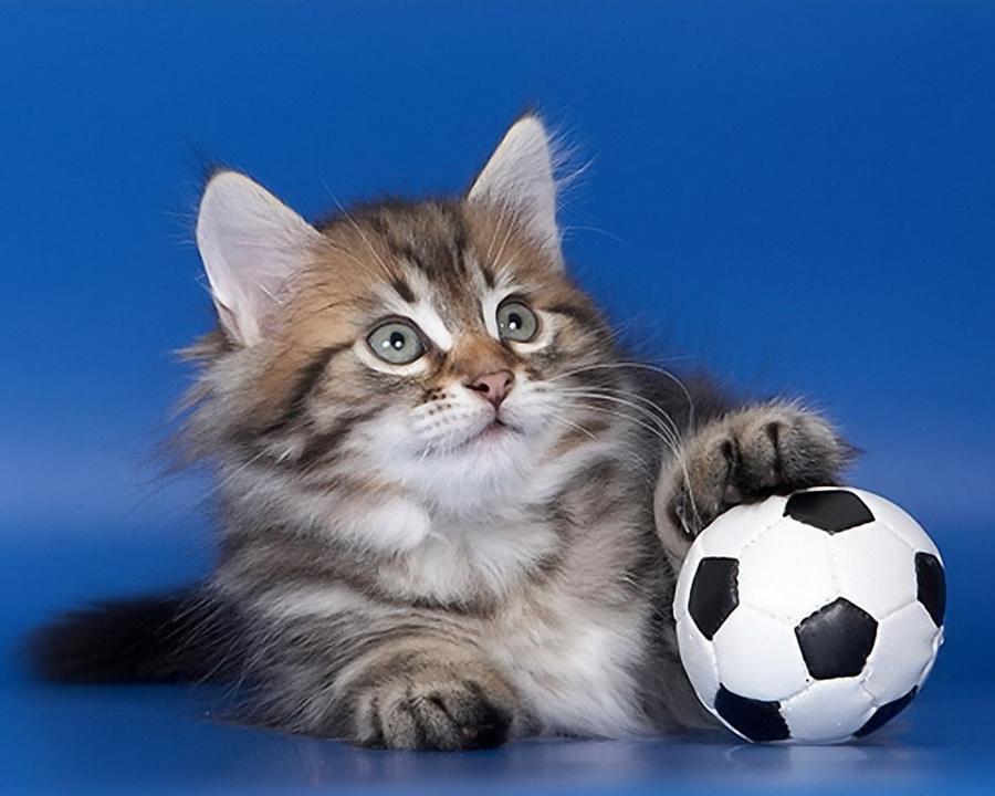 теленовостях картинки котенок с мячиком площадке обрядовая будут