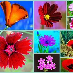 Пазл онлайн: Цветочный коллаж