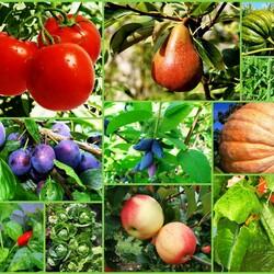 Пазл онлайн: Во саду ли, в огороде...