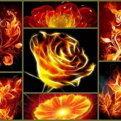 Пазл онлайн: Огненные цветы