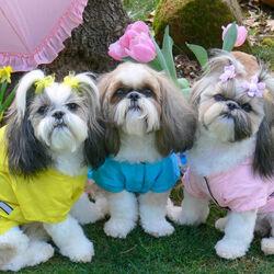Пазл онлайн: Три красавицы