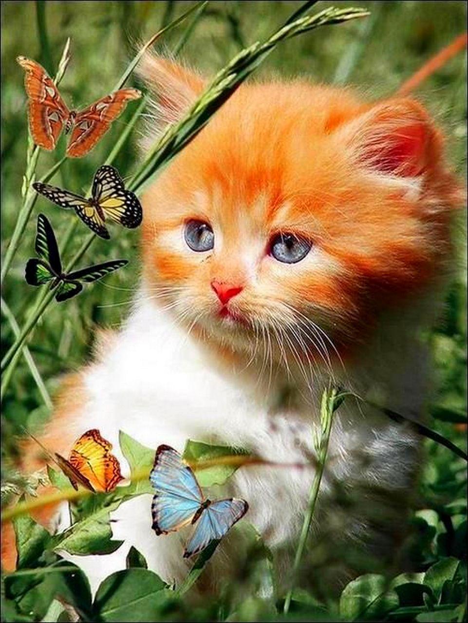 Красивые открытки животных с надписями