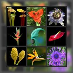 Пазл онлайн: Экзотические цветы
