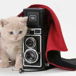 Пазл онлайн: Маленький фотограф