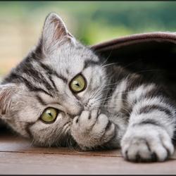 Пазл онлайн: Котенок в коврике