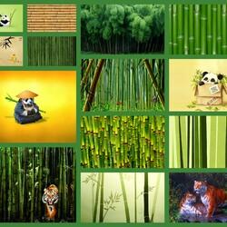 Пазл онлайн: Бамбук