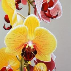Пазл онлайн: Прекрасные орхидеи