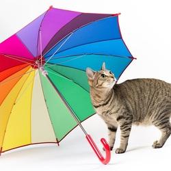 Пазл онлайн: Изящная кошечка с зонтиком