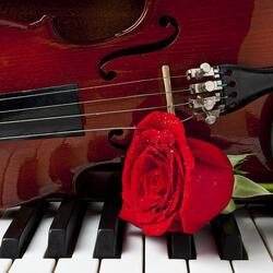Пазл онлайн: Скрипка и роза на фортепиано
