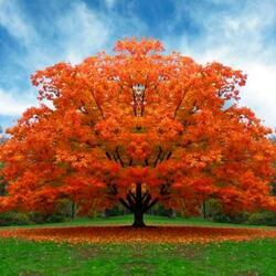 Пазл онлайн: Осенний праздничный наряд