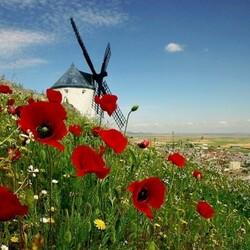 Пазл онлайн: Ветряная мельница