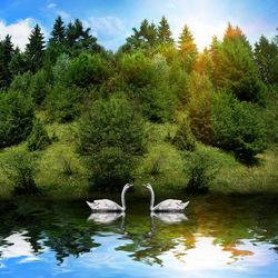 Пазл онлайн: Лебеди на озере