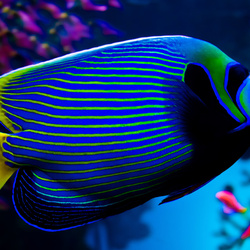 Пазл онлайн: Яркая рыбка