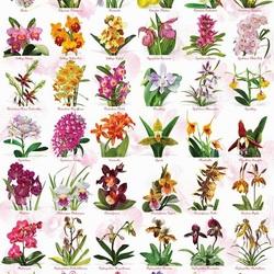 Пазл онлайн: Мир орхидей