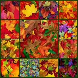 Пазл онлайн: Осенний окрас