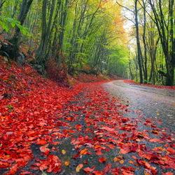 Пазл онлайн: Осенняя дорога