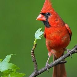 Пазл онлайн: Птичьи портреты