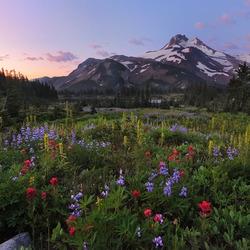 Пазл онлайн: Цветочная долина