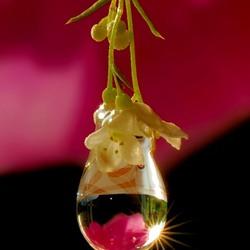 Пазл онлайн: Капля в цветах
