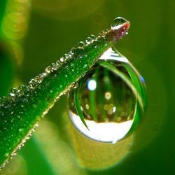 Пазл онлайн: Зелёная капля