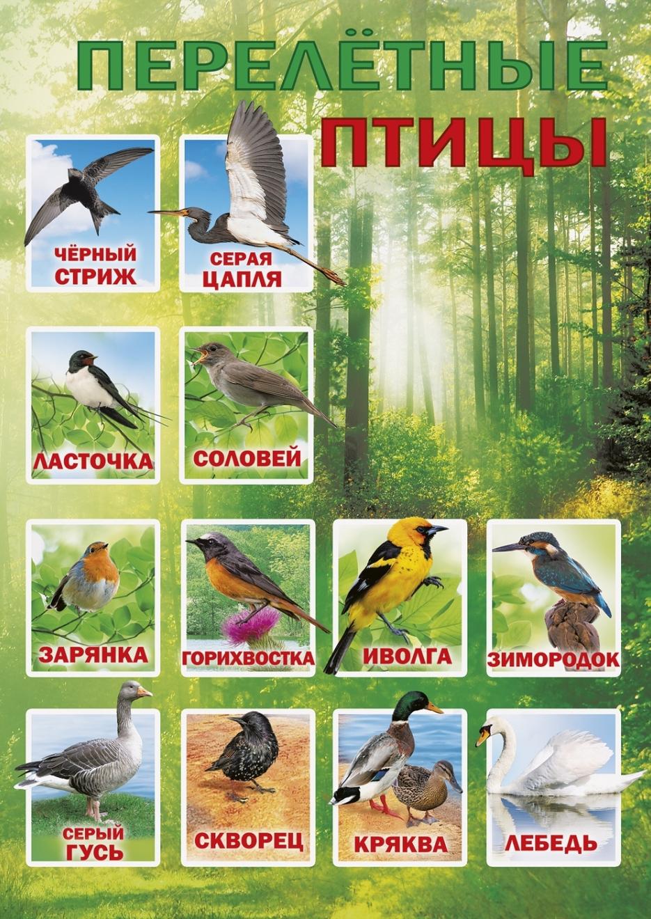 подробно название перелетных птиц фото основным техническим особенностям