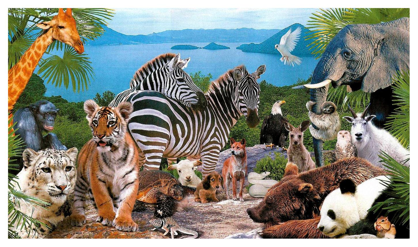 на одной картинке животные