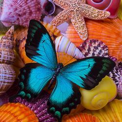 Пазл онлайн: Голубая бабочка и дары моря