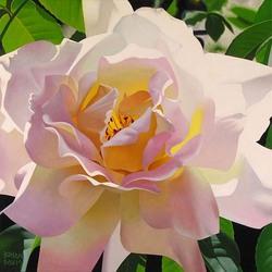 Пазл онлайн: Нетронутая роза
