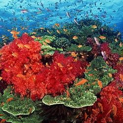 Пазл онлайн: Обитатели морей