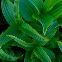 Пазл онлайн: Зелень