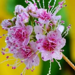 Пазл онлайн: Цветы в каплях дождя