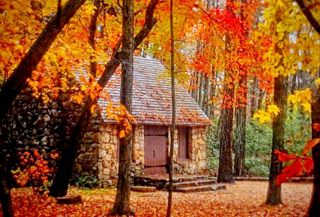Восеннем лесу фото 469-442