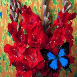Пазл онлайн: Красные гладиолусы и бабочка