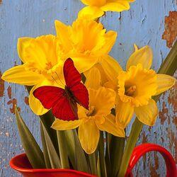 Пазл онлайн: Нарциссы и бабочка