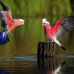 Пазл онлайн: Птичий разговор
