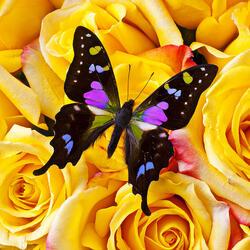 Пазл онлайн: Бабочка и розы