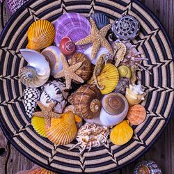 Пазл онлайн: Ракушки и морские звезды