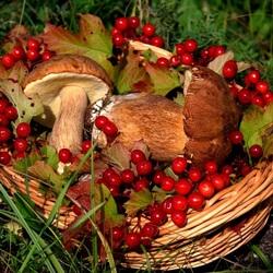 Пазл онлайн: Лесные дары