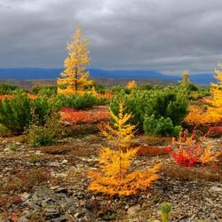 Пазл онлайн: Осень на Сахалине