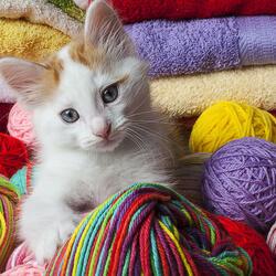 Пазл онлайн: Котенок и пряжа