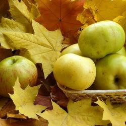 Пазл онлайн: Осенние яблоки