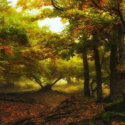 Пазл онлайн: Утро в заколдованном лесу