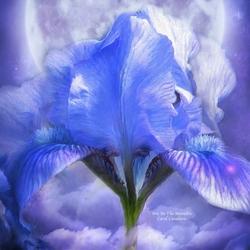 Пазл онлайн: Голубой ирис