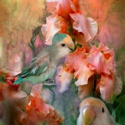 Пазл онлайн: Ирисы и попугаи