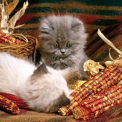 Пазл онлайн: Осенние котята